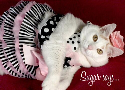 INSPIRATIONAL BIRTHDAY Greeting Card BELLE SUGAR Says FAT CAT FELINE MODEL