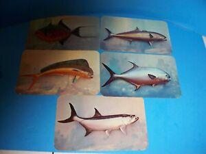 5-Vintage-postcards-lot-FISH-tarpon-dolphin-permit-queen-triggerfish-amberjack