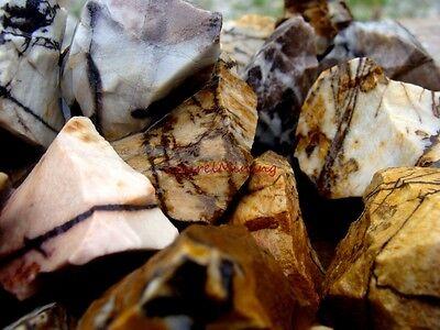 Natural  PETRIFIED ZEBRA WOOD 2000 Carats - Unique Pieces of Stone + Free Gem