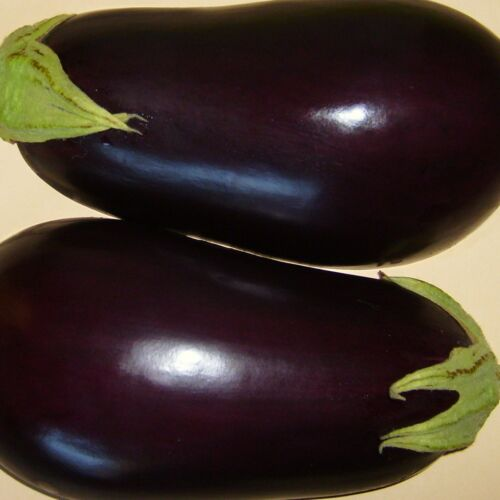 80 Seeds BLACK BEAUTY AUBERGINE ..handsome, pear-shaped fruits, reliable