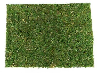 €0,35 // 10g Moos Basteln Beutel Dekorieren Natur-Moos 5 x 20g F341