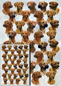 Rhodesian-Ridgeback-Dog-Gift-Wrapping-Paper-by-Starprint-matching-Gift-card
