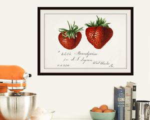 Strawberry Art Print Kitchen Decor Watercolor Vintage Botanical Fruit Ebay