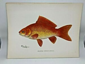 Original-Antique-Denton-Fish-Print-Goldfish