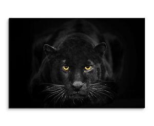 schwarzer panther mit gelben augen wandbild auf leinwand in verschiedenen gr en ebay. Black Bedroom Furniture Sets. Home Design Ideas