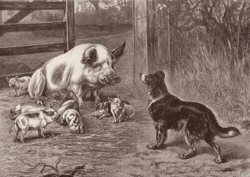 BORDER COLLIE PIG AND PIGLETS LOVELY IMAGE DOG GREETINGS NOTE CARD