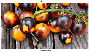 Var Seeds Tomaten Bumblebee Blue Spezielle 10 Saatgut