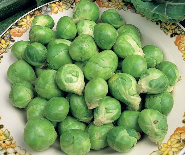 Vegetable Brussels Sprout Evesham Special Appx300 seeds