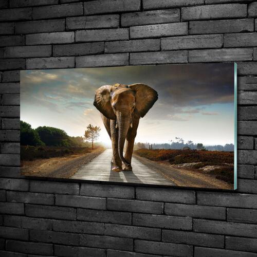 Wandbild Glas-Bild Druck auf Glas 100x50 Deko Tiere Elefant