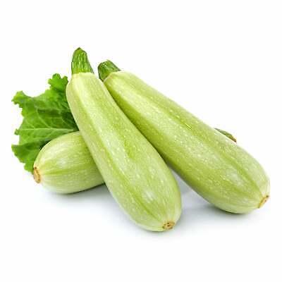 Lebanese Grey Zucchini 7 Seeds Heirloom Summer Vegetable Garden Zuchinni Squash Ebay