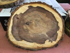 20 x 2 cm Holzscheibe 5 Baumscheiben teilweise ohne Rinde Eiche