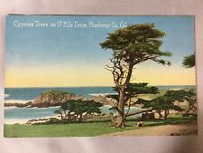 Vintage Cypress Trees on 17 Mile Drive Monterey, CA postcard unposted