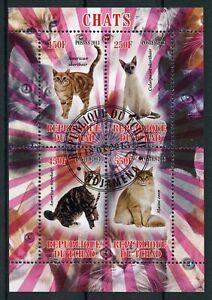Chad-2013-CTO-gatos-Maine-Coon-Americano-Pelo-Corto-4v-m-s-chats-Sellos-De-Gato