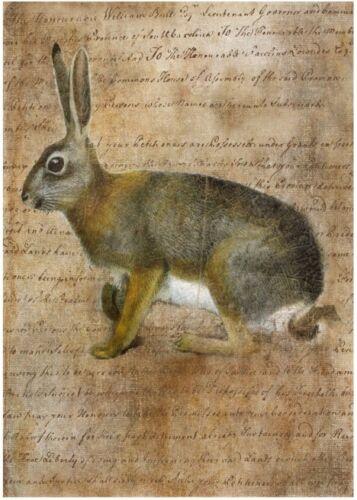3243 Lapin-Pâques-Easter-Lapin Bügelbild-Vintage-Shabby-Nostalgie