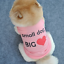 thumbnail 2 - Puppy Chihuahua Sweater Coat Clothes For Small Pet Dog Warm Clothing Apparel USA