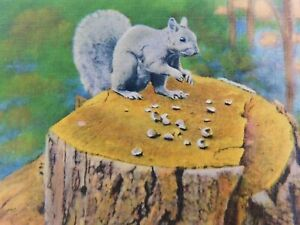 Nut-Cracker-Squirrel-Animal-Wildlife-Animals-Posted-Linen-Vintage-Postcard