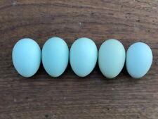 Easter Egger All Blue Half Dozen 6 Hatching Eggs