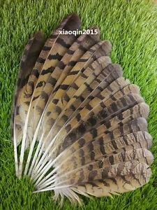 Details about 10-100pcs natural male pheasant feather 25-35cm / 10-14inch