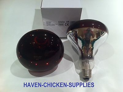 2 X 250w Ruby Red Infrared Brooder Bulb Heat Lamp Chicks Puppies Reptile Heater Ebay