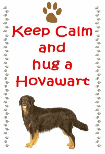 Hovawart Dog fridge magnets New Gift New Free UK p//p