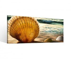 Leinwand 1 Tlg Muschel Muscheln See Strand Meer Bild Wandbild aufgespannt 9B764