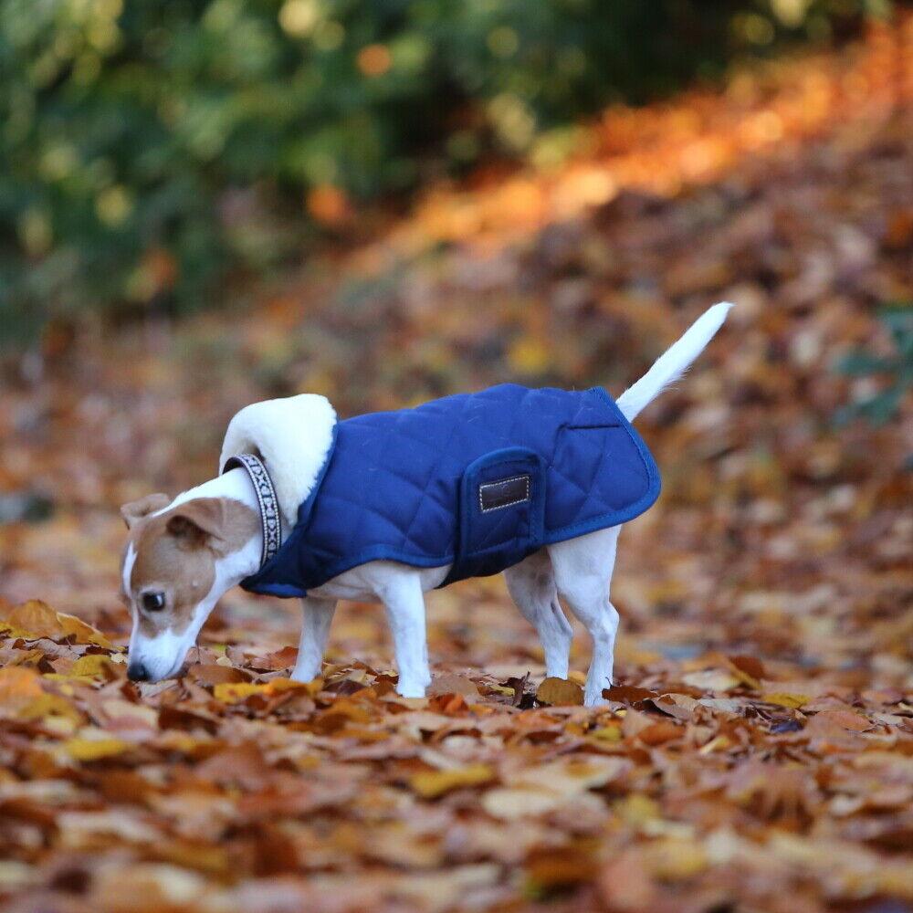 Kentucky Hundedecke Dog coat  160g - Navy