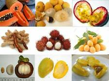 mix 50 fresh tropical mango,jackfruit,durian tree/plant/fruit seeds from Asia