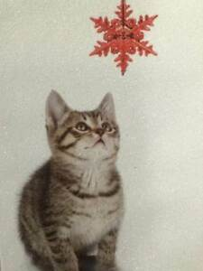 Kitten Christmas Cards.Details About Trimmerry White Sparkle Baby Kitten Christmas Cards Cat With Holiday Ornament