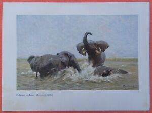 Ensoleillé En éléphant Eau Du Bain Wilhelm Kuhnert Afrique Impression Couleur 1920 N. Peinture-afficher Le Titre D'origine Les Commandes Sont Les Bienvenues.