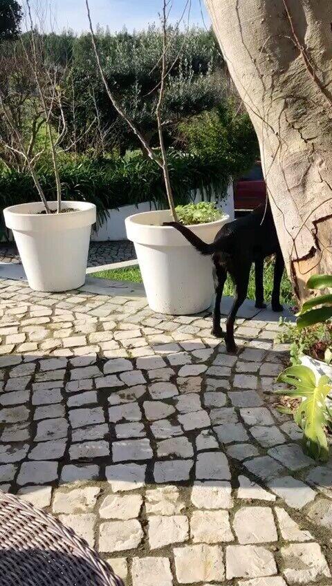 Blanding, hund, 12 mdr.