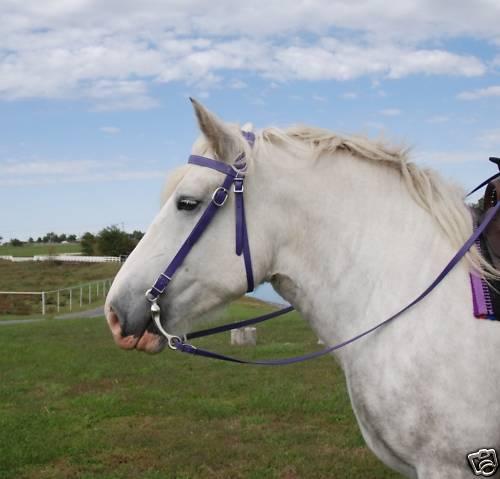 Draft Horse lila beta biothane  bridle,reins,6.5  bit