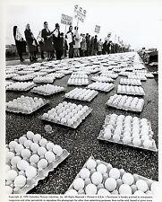 BIANCO, ROSSO E… 1972 VINTAGE PHOTO ORIGINAL #24 Alberto Lattuada eggs  oeufs