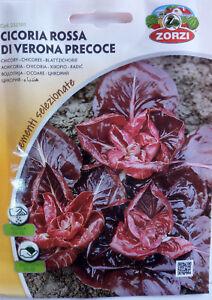 SEMI DI CICORIA Rossa SELVATICA DA CAMPO  semi//seeds