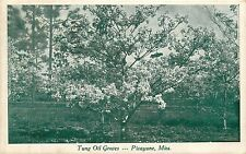 MIssissippi, MS, Picayune, Tung Oil Groves 1942 Postcard
