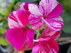 seymourflowers