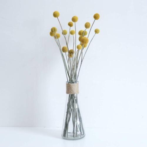Australian Native Natural Dried Craspedia Billy Button Flower Stem NATURAL ...
