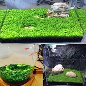 Fish-Tank-Aquarium-Aquatic-Water-Grass-Plant-Seeds-Garden-Foreground-Fresh
