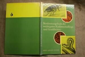 Fachbuch-Forst-Kiefernschaedlinge-Kiefernkrankheiten-Foerster-DDR-1978