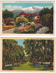 Flowers-amp-Snow-Pepper-Tree-Drive-in-California-LINEN-PC-Unused