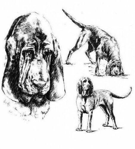 Matted * Bloodhound 1963 Vintage Dog Print