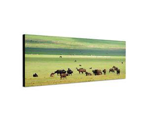 120x40cm-Bueffelherde-Masai-Mara-Safari-Afrika-Serengeti-Leinwand-Bild-Sinus-Art