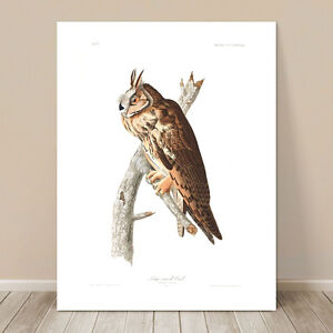 "FAMOUS BIRD ART ~ CANVAS PRINT 8x10"" ~ JOHN AUDUBON ~ Horned Long eared Owl"