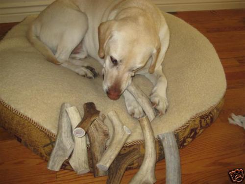 3 Large Elk antler dog bone chews toy antlers deer chew APROX 1 1//2 lbs.
