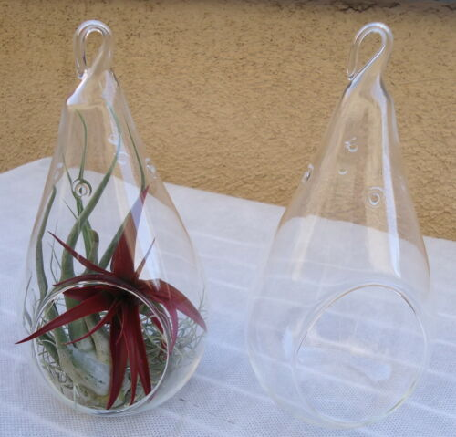 "2 Pack Large 7.25/"" Glass Tear Drop Plant Orb//Terrarium"