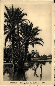 Biskra-Algerien-Afrika-alte-Postkarte-1930-L-039-irrigation-des-Dattiers-Africa