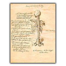 METAL SIGN WALL PLAQUE - BONES OF THE BACK Vintage Print Doctor/Surgery/Medicine