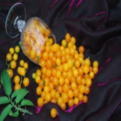 Vegetable - Tomato - Goldrush Currant - 50 Seeds