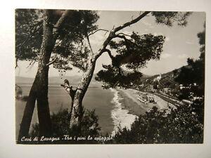 Cartolina-Cavi-di-Lavagna-Spiaggia-tra-i-pini-1952