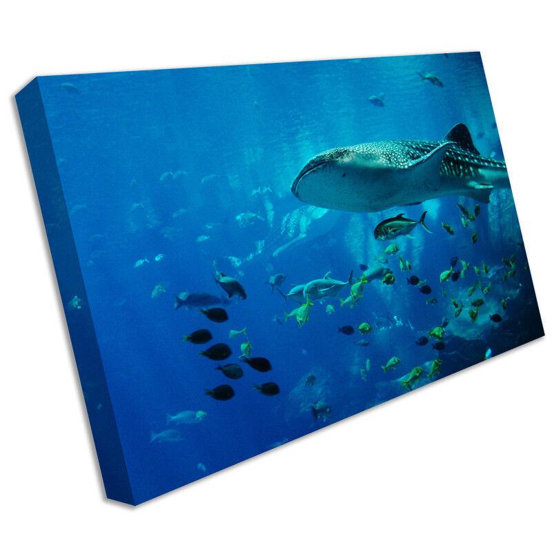 Vita marina pesci FOTO animale stampa su tela incorniciato FOTO pesci MURO ARTISTICO 6226a3