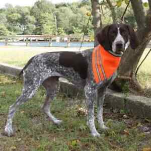 AKC-Pet-Safety-Dog-Bandana-with-Reflective-Stripes-Orange-Sizes-S-L